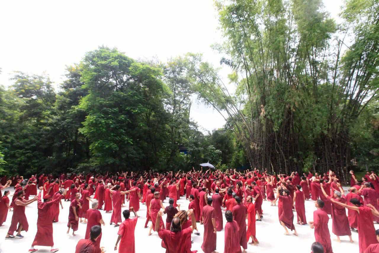 In Buddha Grove